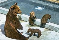 Bärengraben in Bern wiedereröffnet